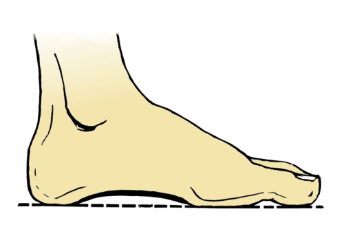 the purpose of the foot arch